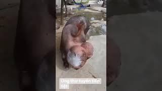 Những tình huống hài hước - Funny Video - Part 8