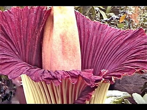 World's Largest Strangest Flowers, Radiation, Compass, Space Alien, melt ice, see, make rubber, move
