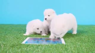 Sago Mini Puppy Preschool
