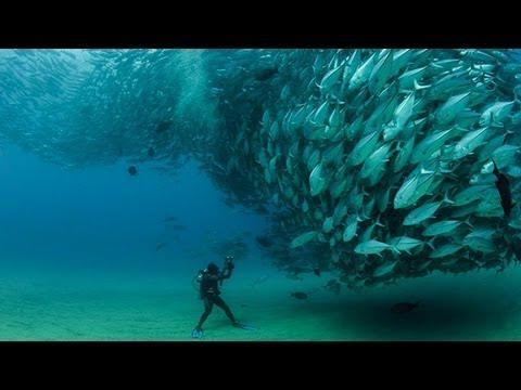 TUNA TORNADO - Huge Swarm of Jack Fish Dwarf Scuba Diver