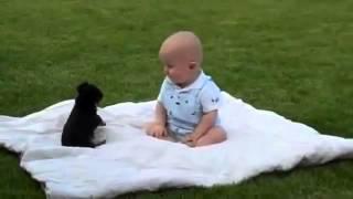 Lucha entre perro y bebe!!! Adivinen quien gana!