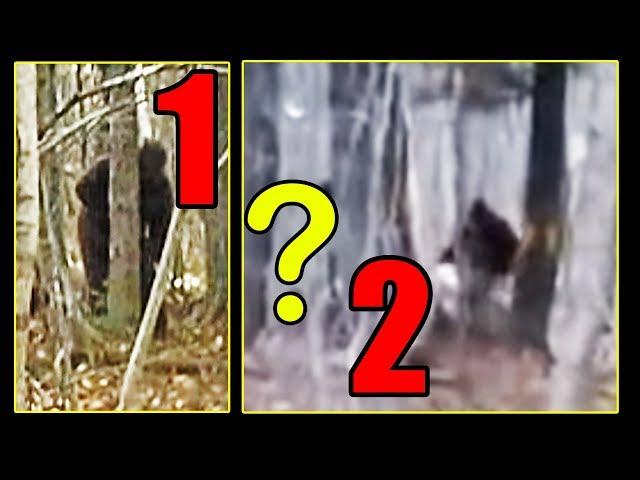 Maine, USA Bigfoot sighting - Breakdown
