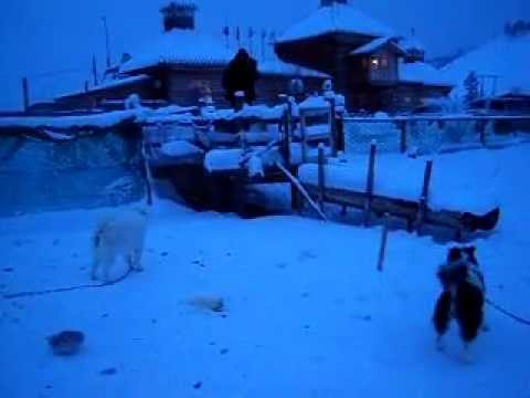 Russia - Yakutsk Siberia coldest place - Sled dogs sleep at -50 degrees to have their fur thicker