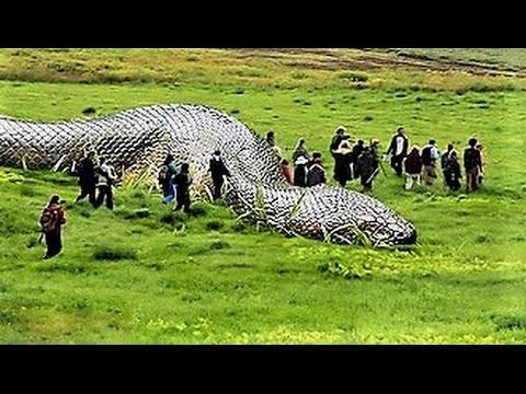 12 Strangest Snake Cryptids
