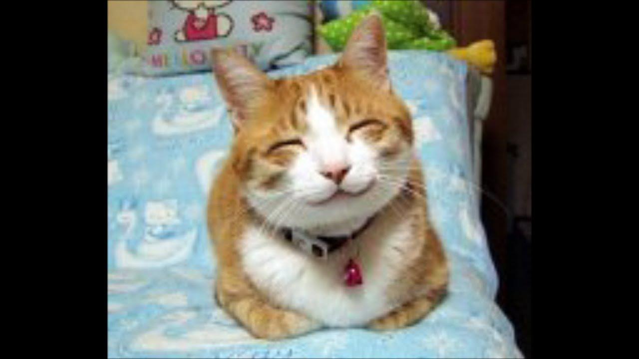 猫の画像 p1_26