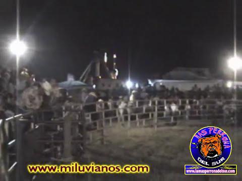 toros en la feria, puro luvianos compas