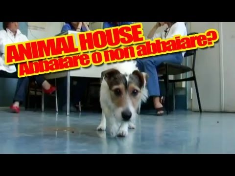 Abbaiare stanca: Amleto il Jack Russell ad Animal House