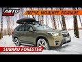 Почему Subaru Forester - отличный семейный кроссовер. Семейный тест-драйв | Своими глазами