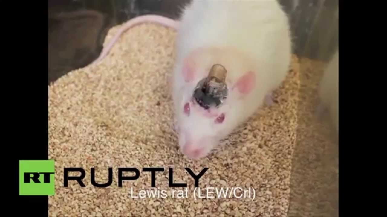 RAW: LED brain implants take over minds of mice