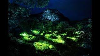 khám phá khu rừng ánh sáng huyền ảo giống hệt phim viễn tưởng Avatar tại Saga Nhật Bản