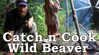 Catch and Cook WILD BEAVER!!! | BEYOND SURVIVAL | The Wilderness Living Challenge 2017 | S02E04