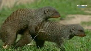 इन जानवरों के संभोग करने का तरीका बहुत ही खतरनाक है   dangerous animals  