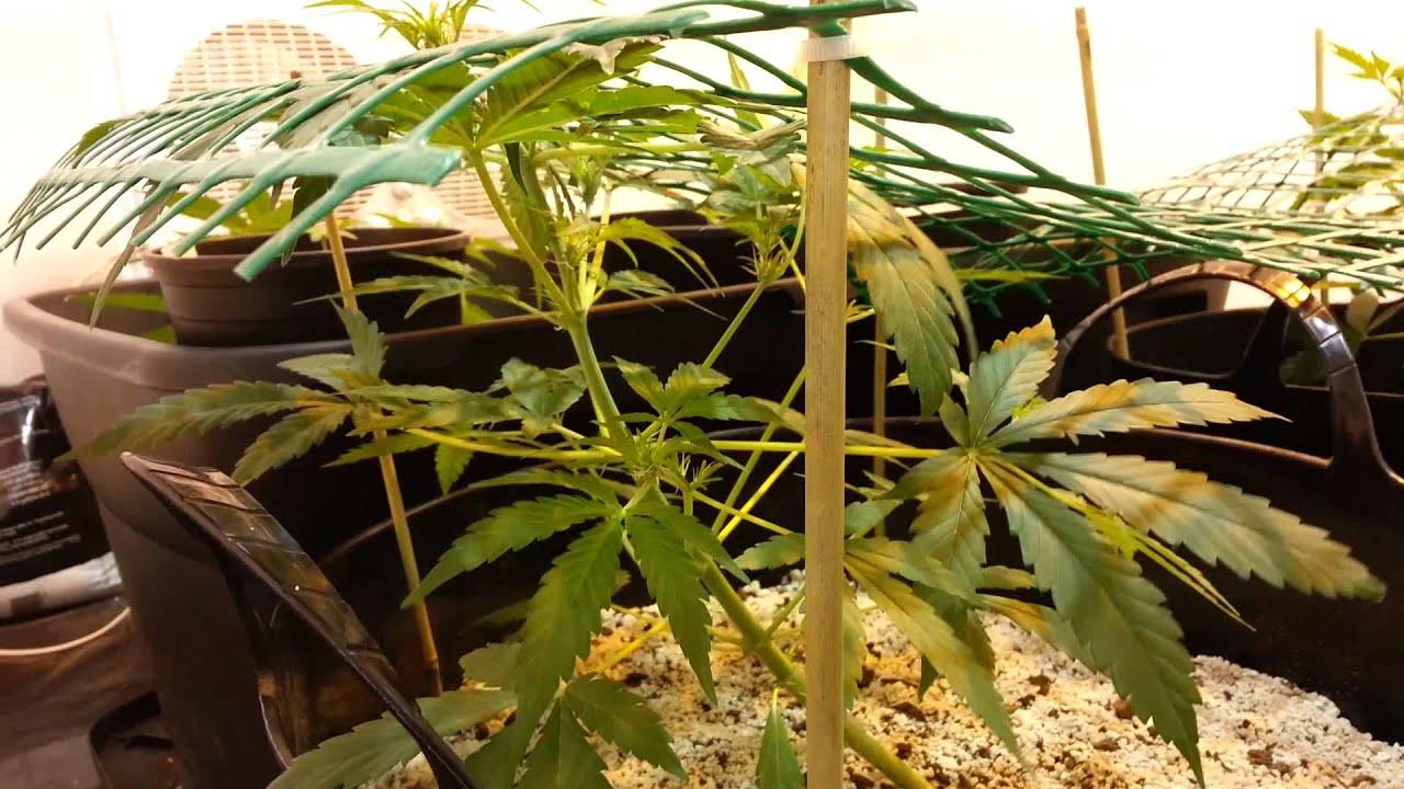 Lst метод выращивания 92