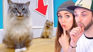 PETS REACT to our NEW PUPPY!