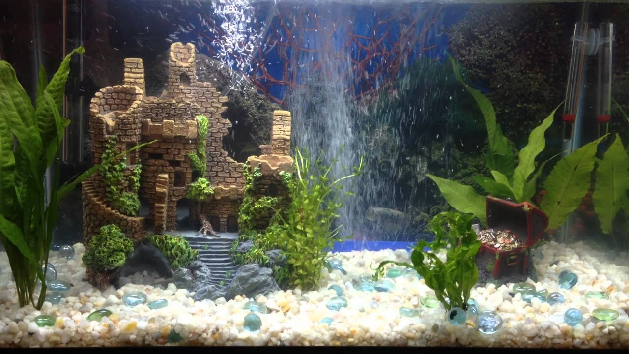 10 gallon fresh water aquarium tropical youtube for Fish tank castle