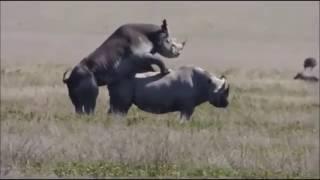 Ndani ya Safari ya Ngorongoro Crater  Jionee video hii hapa