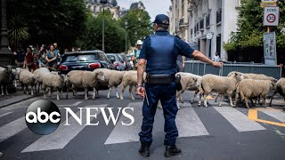 Sheep crossing in Paris, heatwave and rainbow golf: World in Photos, July 18