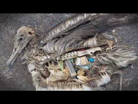Hungry Beast - pacific ocean garbage dump