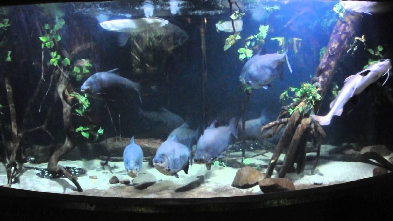 South American Aquarium At The Blue Planet Aquarium Cheshire Youtube