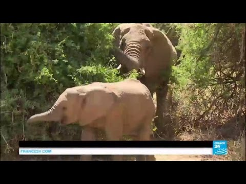 Kenya elephant summit: Leaders gather to try to save animals from extinction