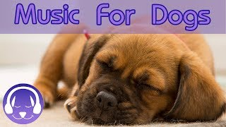 Calming, Soothing Music for Dogs and Puppies! Relaxing Music for Anxious Dogs to Help Sleep & Calm!