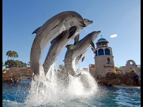 "♥♥ SeaWorld s Old ""Dolphin Discovery"" Show (in HD)"