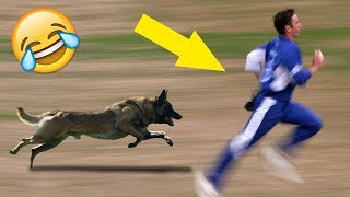 #3 Animals Attacks in Cricket 😱Shocking Moments😱 || Cricket Mart ||