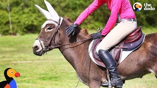Donkey Loves Jumping With Her Mom | The Dodo