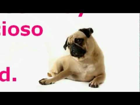 Ventajas de la esterilizacion y de la castracion de mascotas