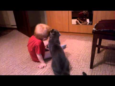 Cat and Boy are the Faithful Friends