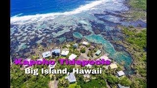 Kapoho Tidepools - Big Island Hawaii (with Directions)