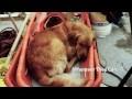 Dog Files - Ep.11 - Hero Dogs Of 9/11