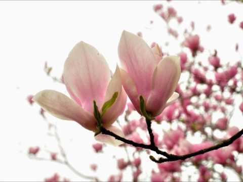 木蘭の画像 p1_32