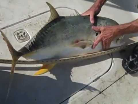 Fishing Sabine Pass Jetty with LA Brown  11/05/2012