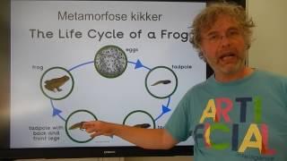Biologie 1109 HV De levenscyclus van een kikker
