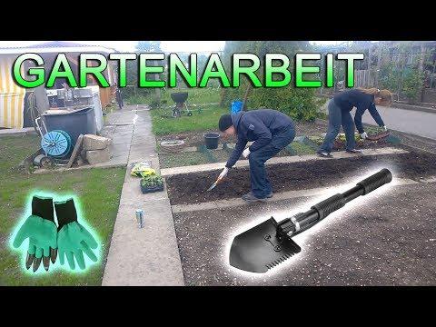 Gartenarbeit Machen und Garten Renovierung - Paprika Keimlinge Pflanzen im Garten