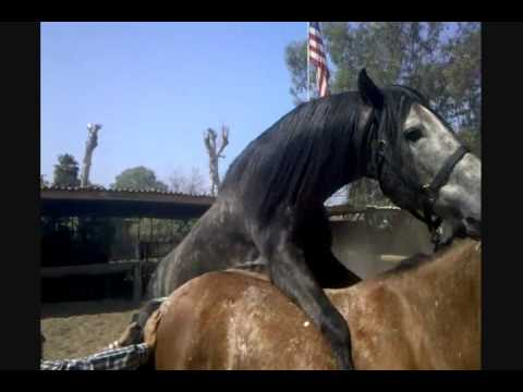 Funny Horse Video!!!   Ruben Getting D***slapped!!!!