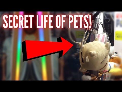 Winning On The Secret Life of PETS Claw Machine!!