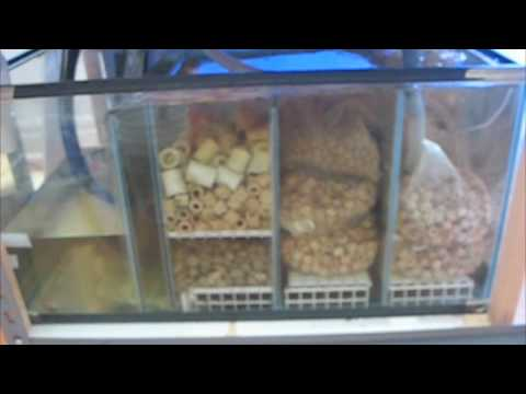 New turtle tanks and diy sump filter youtube for Diy biological filter media