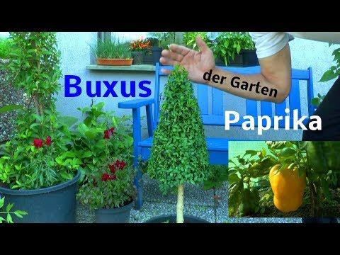 Garten im August Gewächshaus und was sich lohnt für uns