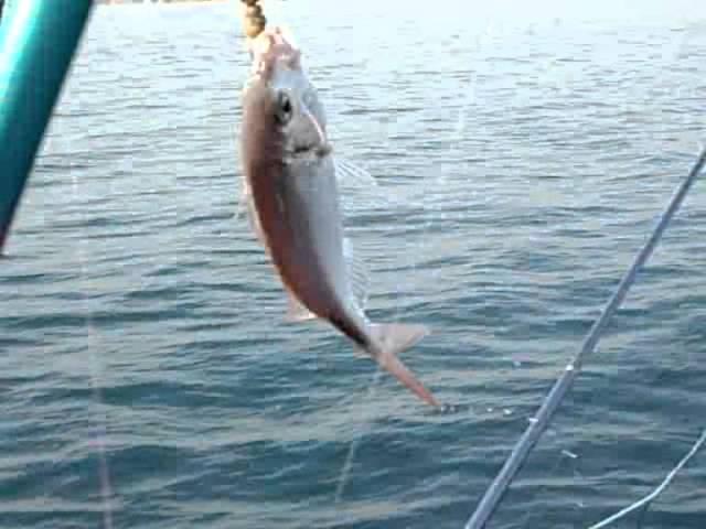 día de pesca en barco 31.03.2012