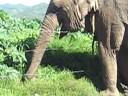Tigres y Elefantes se escapan de Circo en Zitacuaro