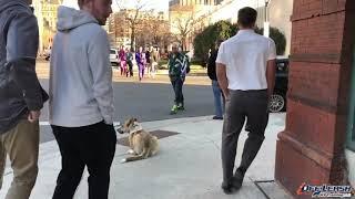 Best dog Training Milwaukee| Mixed dog training Milwaukee|Husky mix Training