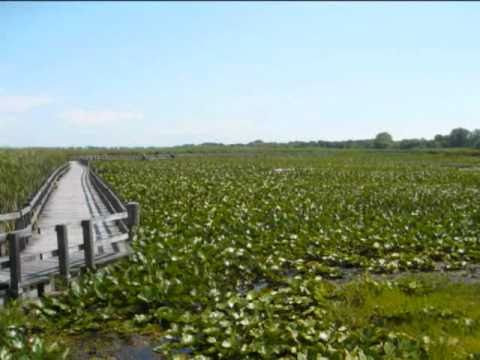 Travel Ontario: Camping tour: Lake Erie, Pelee Point National Park and Peele Island