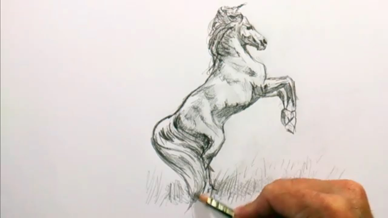 How to draw a realistic horse step by step for kids