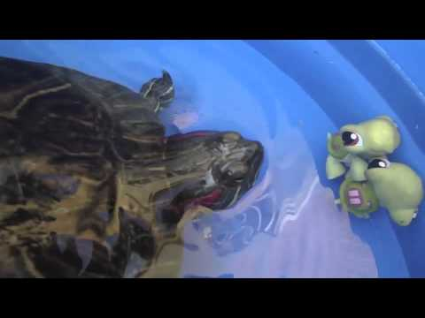 LITTLEST PET SHOP. TORTUGAS AL RESCATE. Turtle rescue