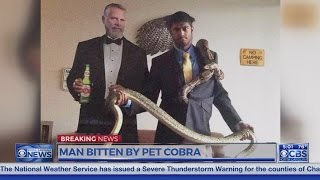 Ali Iyoob NC Nig gets bitten by one of his King cobras-- in critical condition; anti-venom administe