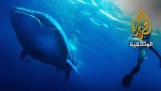 زيارة قرش الحوت (سواحل قطر) | الفيلم الكامل