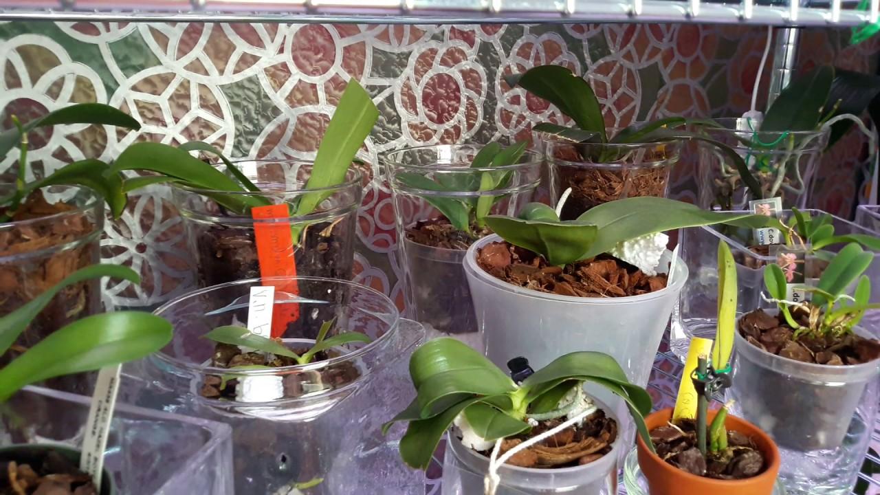 Поэтапное выращивание орхидей 80