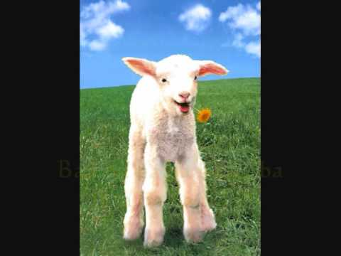 Baa Baa Black Sheep Video